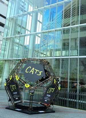 cat1-2